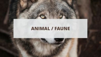 Objectifs pour un CV lié aux animaux et à la faune